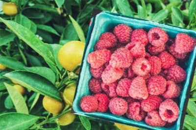 Raspberry Lemonade Flavoring